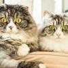 シャンプーの事実に驚くネコ